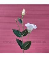 Eustoma Stonka Kvet dva puky zápich biela 48cm