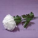 Chryzantéma na stonke biela 71cm