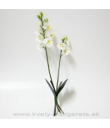 Phalaenopsis white yellow x2 s listami NATUR FEEL