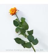 Ruža otvorený puk oranžovo žltá