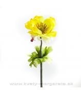 Anemónium yellow