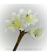 Amarylka biela 3-kvetá