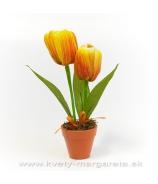 Dva tulipány v kvetináči orange