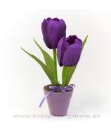 Dva tulipány v kvetináči fialové