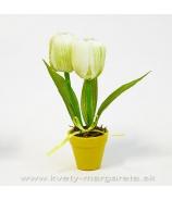 Dva tulipány v kvetináči bielo zelená