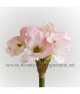 Amarylka 5-kvetá rúžová