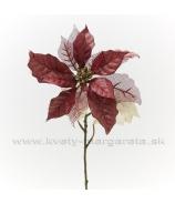 Vianočná ruža mix listov Burgundy- zľava 50%
