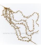 Previs dekoratívnej trávy zlatý