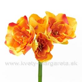 Amarylis Flamenco x4 - výpredaj zľava 50%