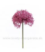 Allium Bordové