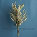 Chaluha korálová Green penová