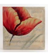 Obraz na plátne polychrom Mak s dvomi pukmi 30x30 cm