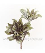 Bromélia dvojhlavá penová Sivo-biela