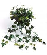 Brečtan English Ivy ťahavá zeleň 180 listov 95cm