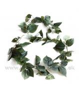 Brečtan English Ivy zelená girlanda ťahavá 200cm