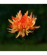 Chryzantéma stonková strapatá 43cm Oranžová