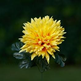 Chryzantéma stonková pologuľa 12cm x 43cm Žltá