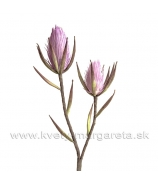 Vetva penová Protea x2 hlavy škoricová 70cm