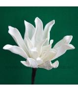 Kvet penová Magnólia sivo-hnedá s bielym melírom 33cm