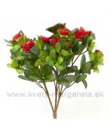 Azalka do kvetináča 25cm červená