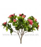 Azalka do kvetináča 25cm