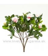 Azalka do kvetináča 25cm cyklámenová