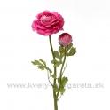 Kvet Ranunculus dvojhlavý s listami 50cm Fuxiová