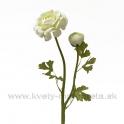 Kvet Ranunculus dvojhlavý s listami 50cm smotanovo-krémový