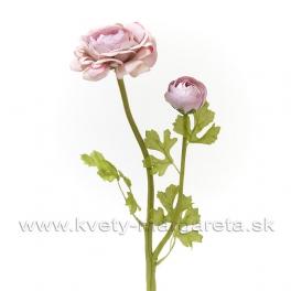 Kvet Ranunculus dvojhlavý s listami 50cm starorúžová