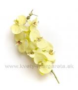 Orchidea Phalenopsis pistáciová 70cm - Zľavová AKCIA -50%